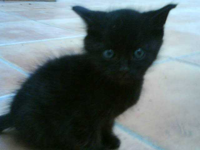 Επειγον μικρο γατακι διωχνεται απο πολυκατοικια!!!! DSC000501