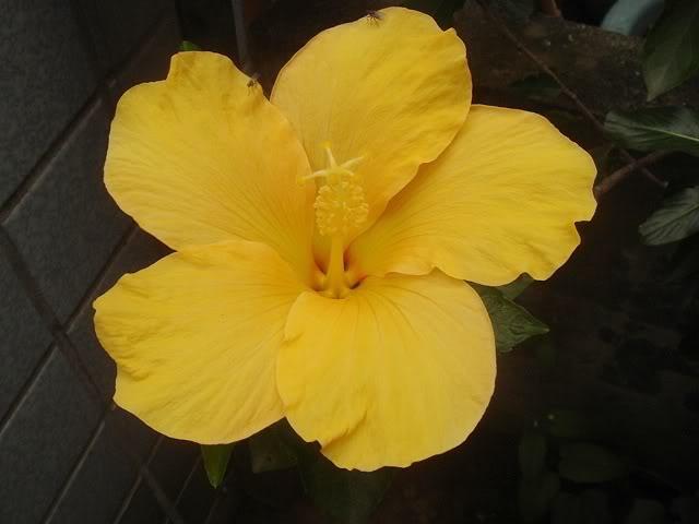 亂亂種的花園 DSC01894