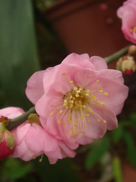 亂亂種的花園 DSC01901