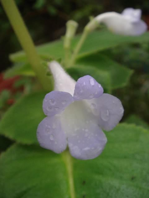 亂亂種的花園 DSC01923