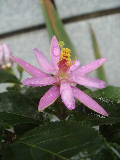 亂亂種的花園 DSC01944