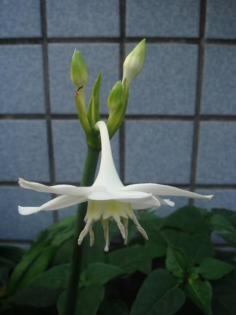 亂亂種的花園 DSC02082