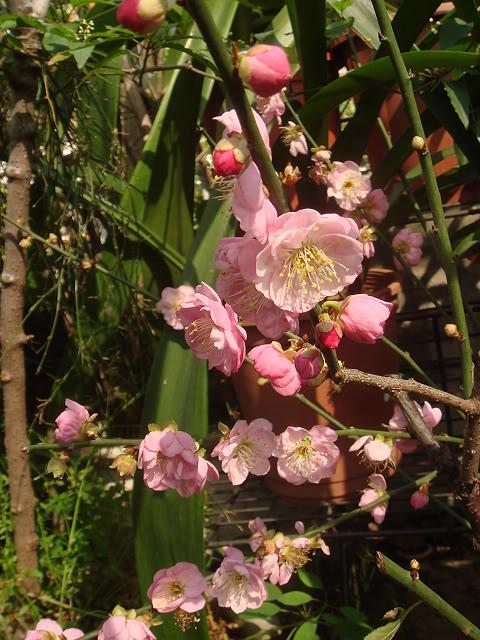 亂亂種的花園 DSC02101
