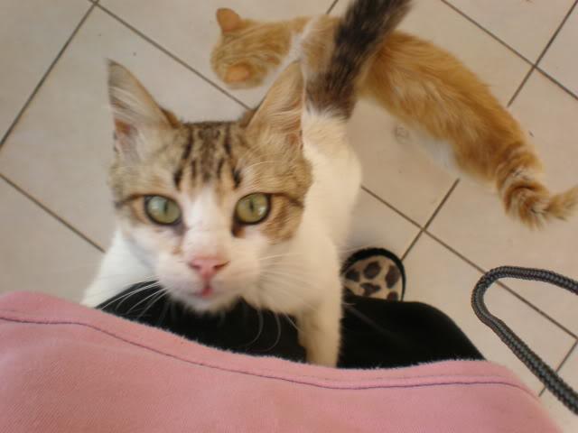 Τα γατάκια της αυλής P4240371