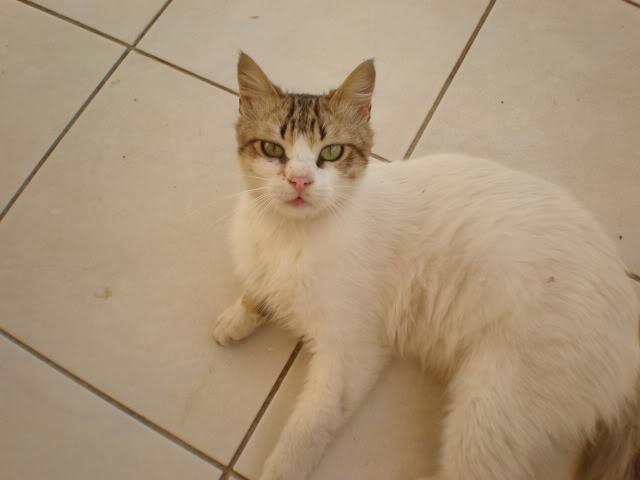 Τα γατάκια της αυλής P4240373