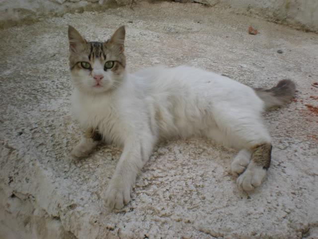 Τα γατάκια της αυλής P4240376
