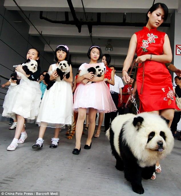 Anjing pun Kini Bisa Disulap Menjadi Harimau Dan Panda 78dd4d31