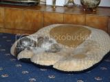 A funny thing -floating dog bed Th_DSC02041