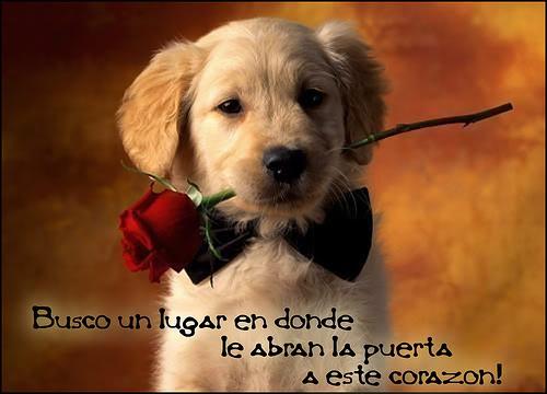 Cuando llega el Amor! 317317471_d6c4fb0e1a