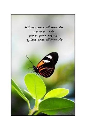 Reflexiones - Página 2 Mariposa-1