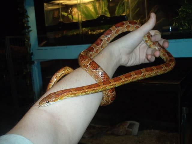 The snakes! DSCF4096