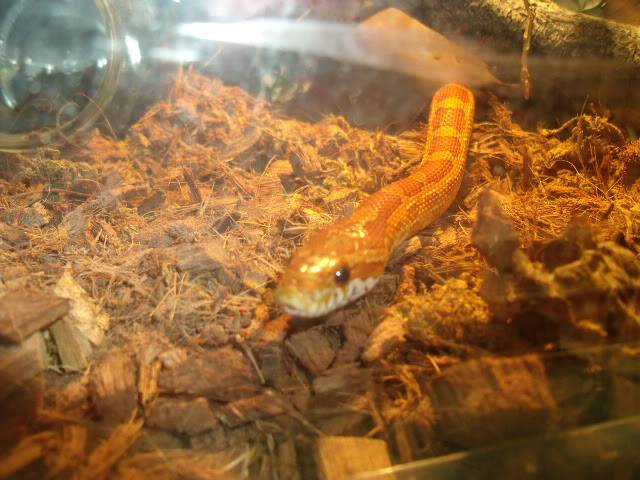 The snakes! DSCF4134
