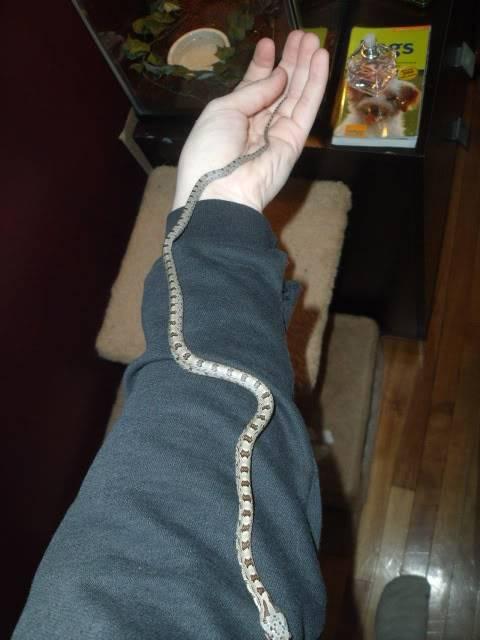 The snakes! DSCF4199