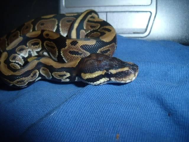 The snakes! DSCF4245