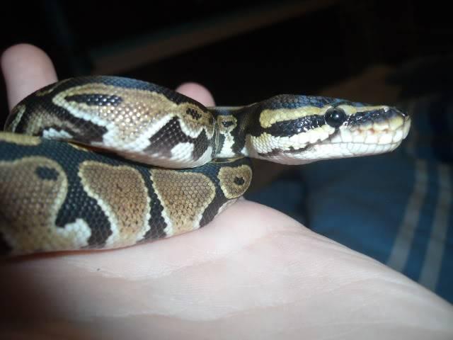 The snakes! DSCF4254