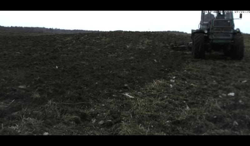 Black Grouse Webcam lovers Nagulumieriderong