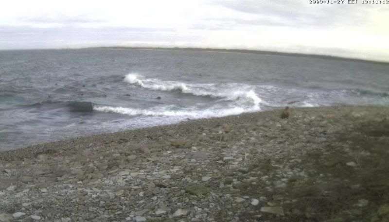 Grey Seal webcam - Page 4 WTE2009-11-2713-17-38-43