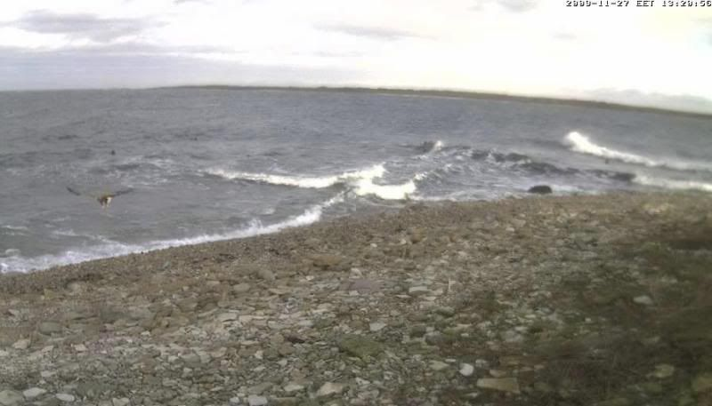 Grey Seal webcam - Page 4 WTE2009-11-2713-27-20-73