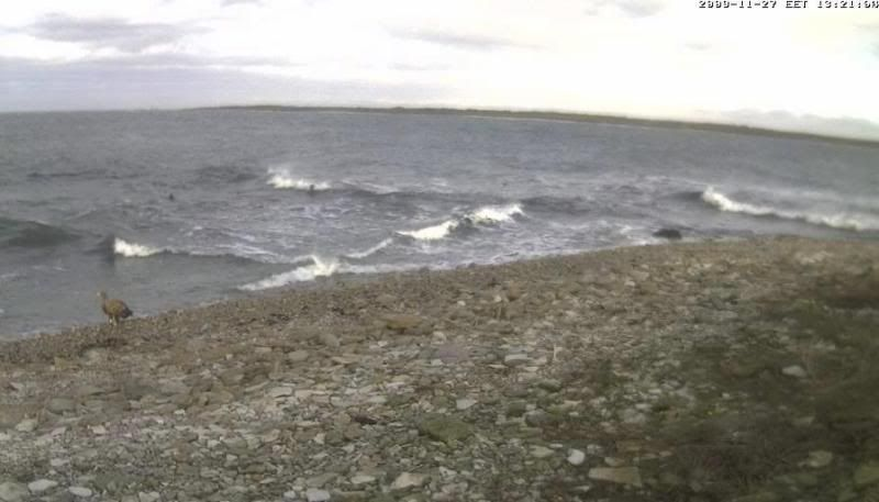 Grey Seal webcam - Page 4 WTE2009-11-2713-27-29-35