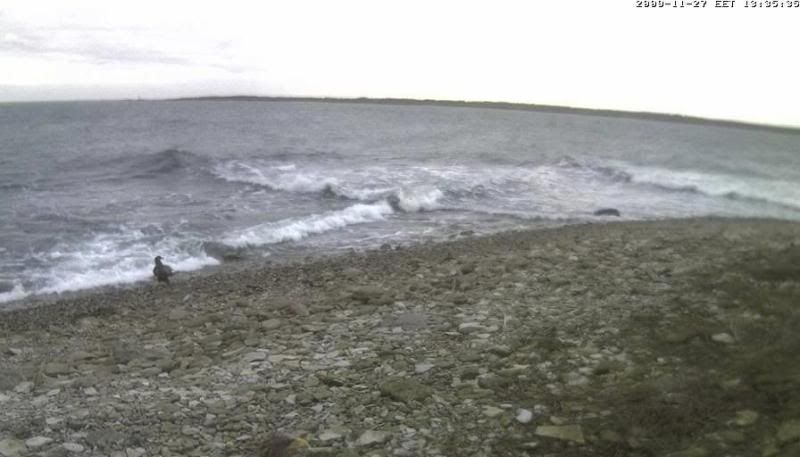 Grey Seal webcam - Page 4 WTE2009-11-2713-42-00-71