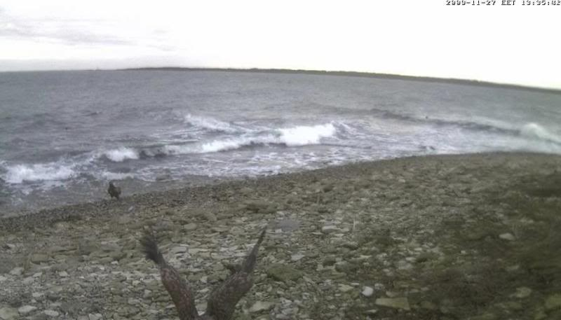 Grey Seal webcam - Page 4 WTE2009-11-2713-42-06-64