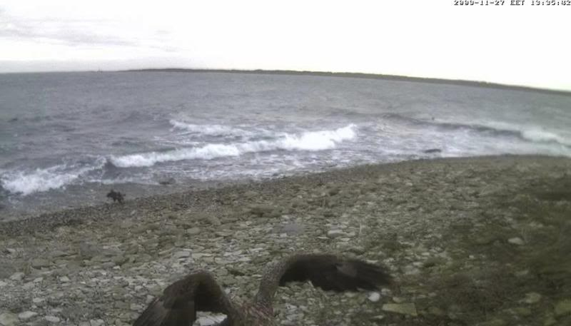 Grey Seal webcam - Page 4 WTE2009-11-2713-42-07-12