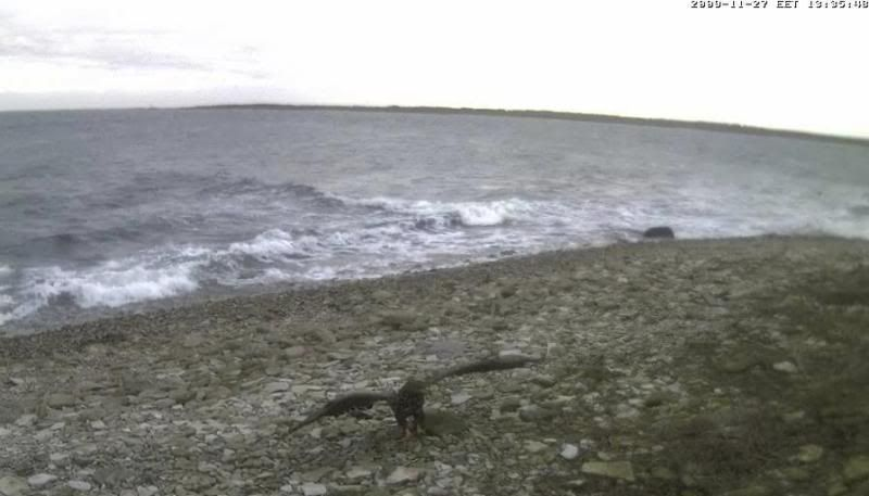 Grey Seal webcam - Page 4 WTE2009-11-2713-42-13-54