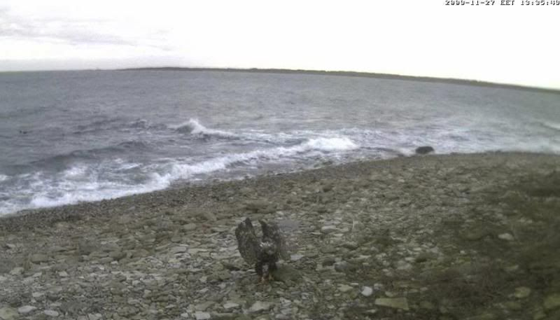 Grey Seal webcam - Page 4 WTE2009-11-2713-42-14-40