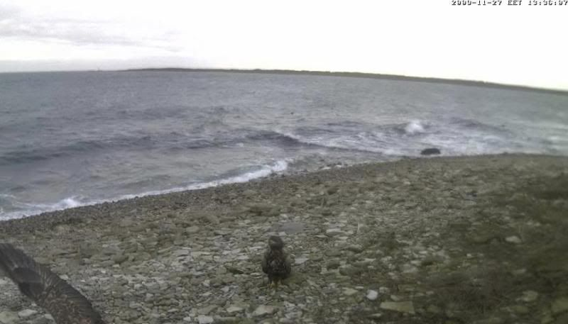 Grey Seal webcam - Page 4 WTE2009-11-2713-42-32-34