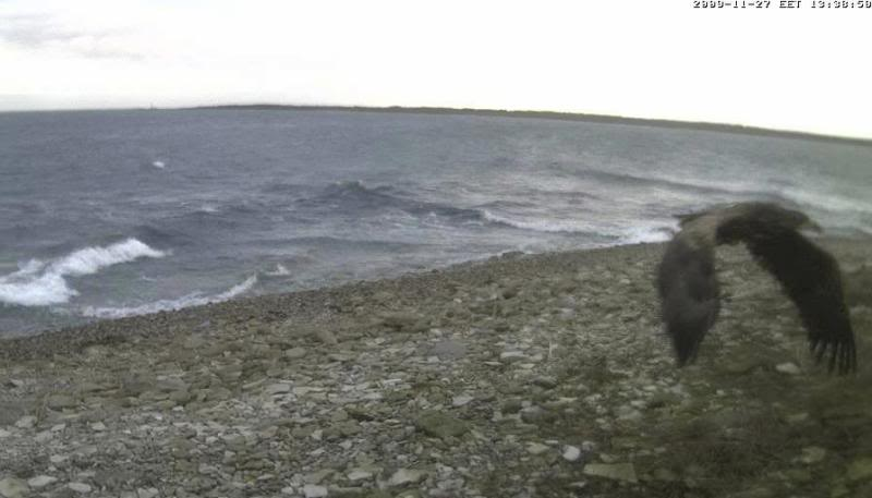 Grey Seal webcam - Page 5 WTE2009-11-2713-45-24-25
