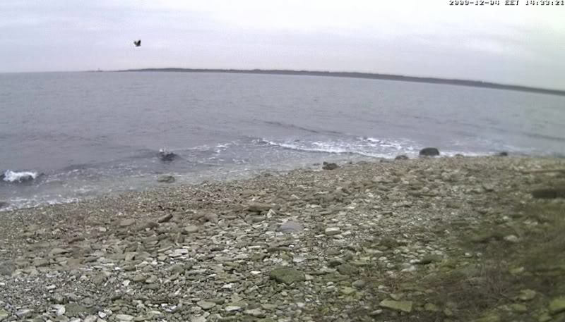 Grey Seal webcam - Page 5 Akotkaslendab2009-12-0414-32-15-35