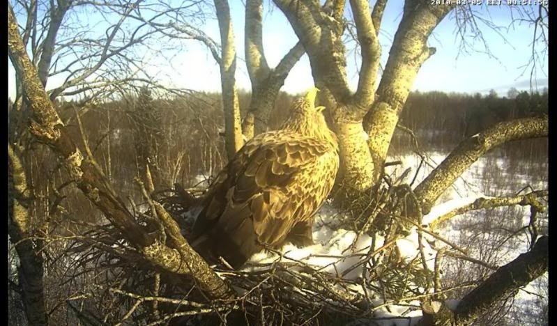 White-tailed Eagle Camera Lovers - Page 2 Haigutab