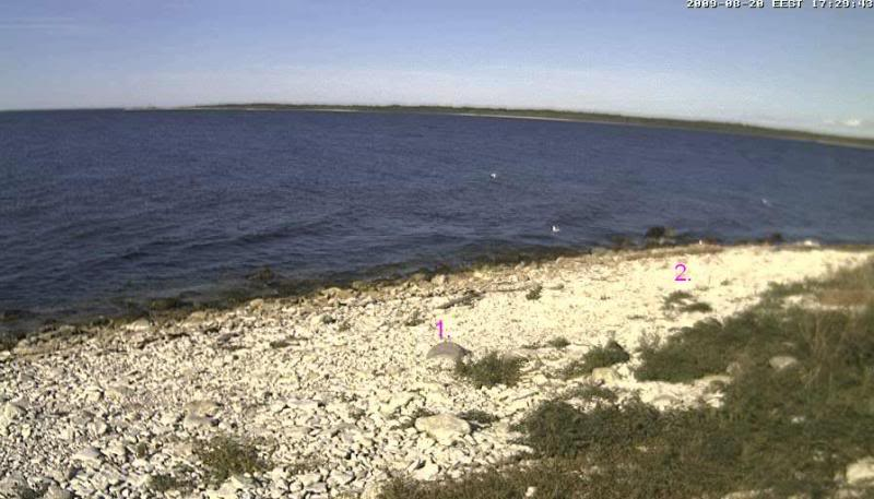 Grey Seal webcam Hyljes2009-08-2017-29-42-03