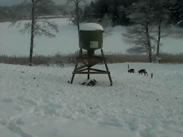 Wild Pig Camera Lovers/ ADDRESS CHANGED TO SWEDISH STREAMING CAM - Page 6 Deer32010-01-1211-25-23-71
