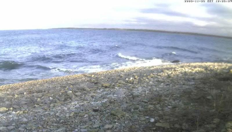 Grey Seal webcam - Page 4 Sun2009-11-2612-34-45-21