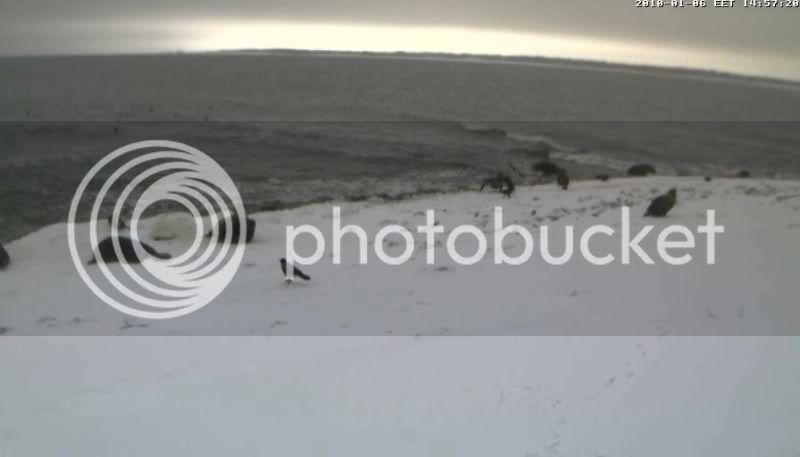 Grey Seal webcam - Page 6 Vares32010-01-0614-57-51-48