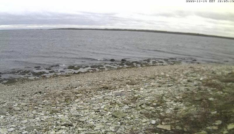 Grey Seal webcam - Page 3 Vilsandi2009-11-1412-04-18-64
