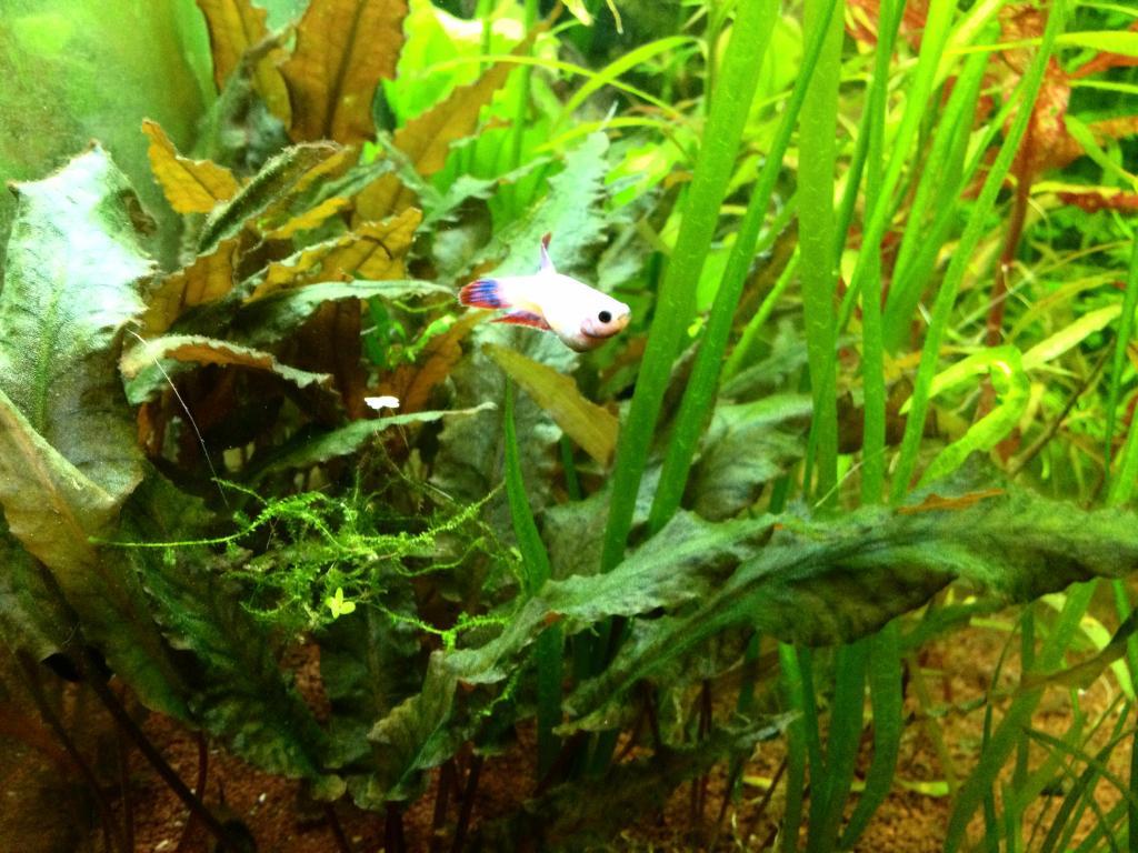 Pink Lady et Amazone les fifilles de Momo Star  450_zps2qoyledt
