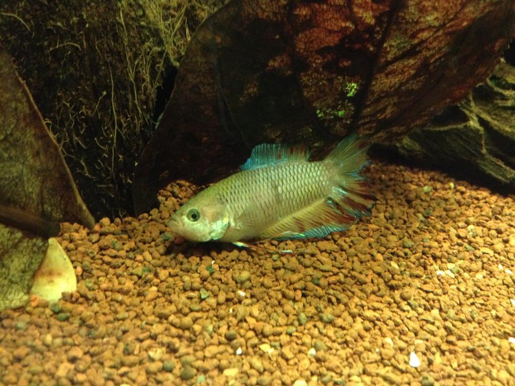 40l super fish home 40  - Page 3 2F25FF8D-2BD8-4F94-A3E1-FFB358366187_zpsox0lmn9j