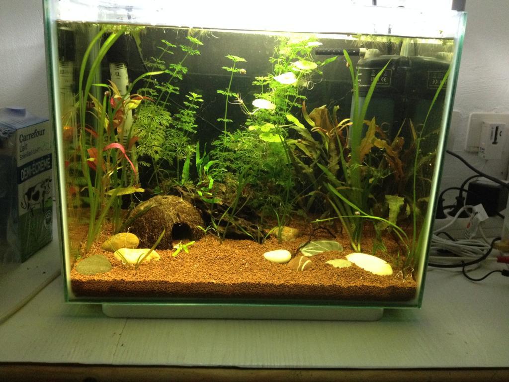 40l super fish home 40  - Page 4 638474AF-BFC6-4639-97E2-282E8D10E70D_zps4x7zhtmm