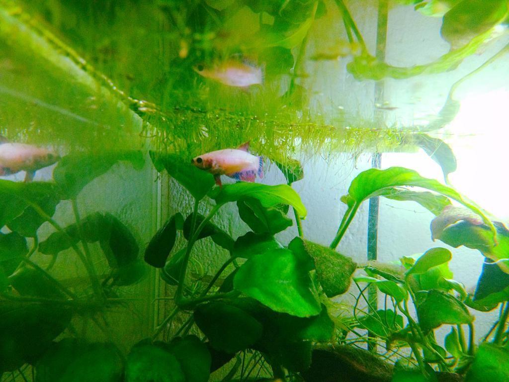 Pink Lady et Amazone les fifilles de Momo Star  - Page 3 D384897E-B7B5-42D1-BAC4-E510306086D9_zpsb5oru7u1