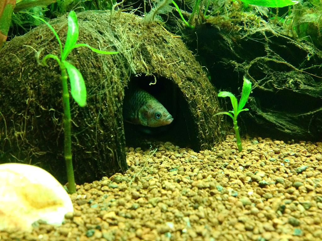 40l super fish home 40  - Page 2 DEBC28BA-05E3-4C61-BEC6-CA938F35A8E0_zpsibezx9ve