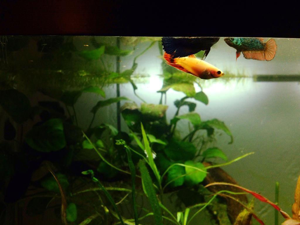 Pink Lady et Amazone les fifilles de Momo Star  - Page 3 E7DA09F0-7184-4E4F-A043-D4F89DD13137_zpszlqkadhv