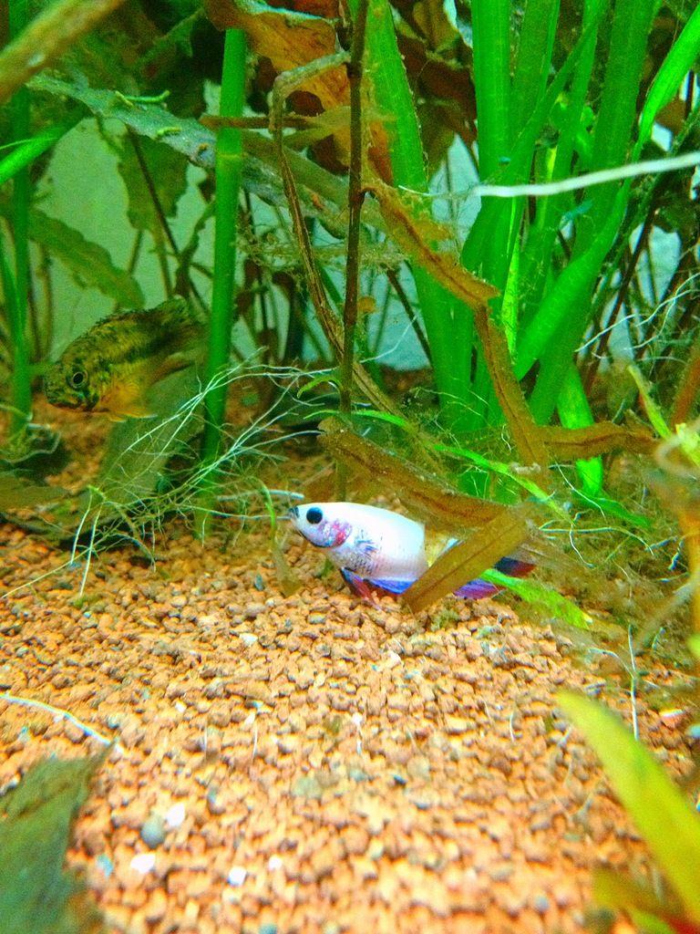 Pink Lady et Amazone les fifilles de Momo Star  - Page 3 2AFEE1B1-1D66-4624-A940-E0C3EA49E106_zpsevhwthqu