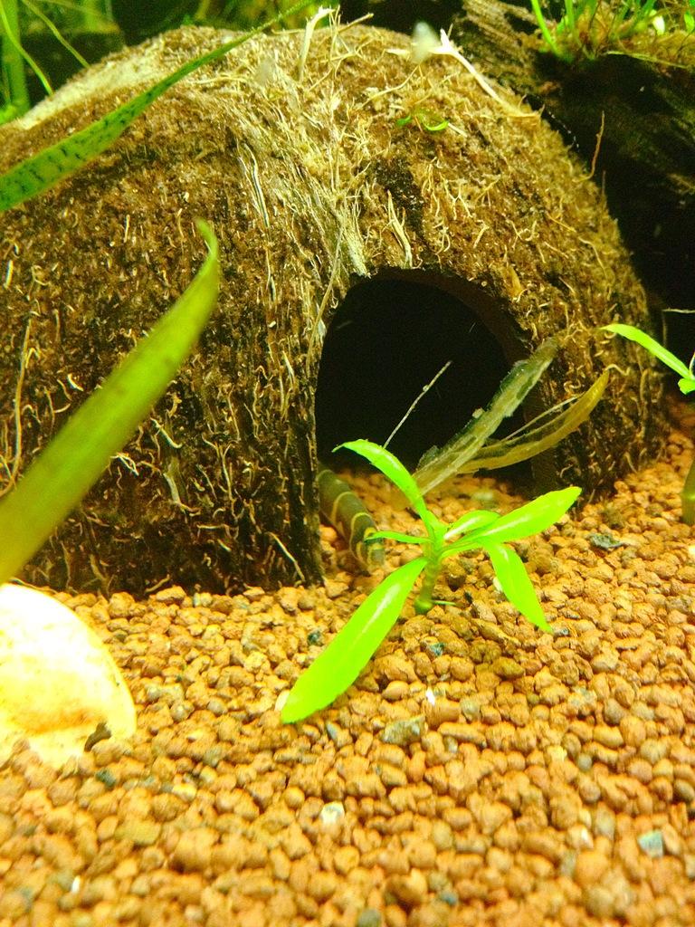 40l super fish home 40  - Page 4 5EF2623E-7F6D-4653-AAF9-8D86FBC68FA6_zpshekq7imu