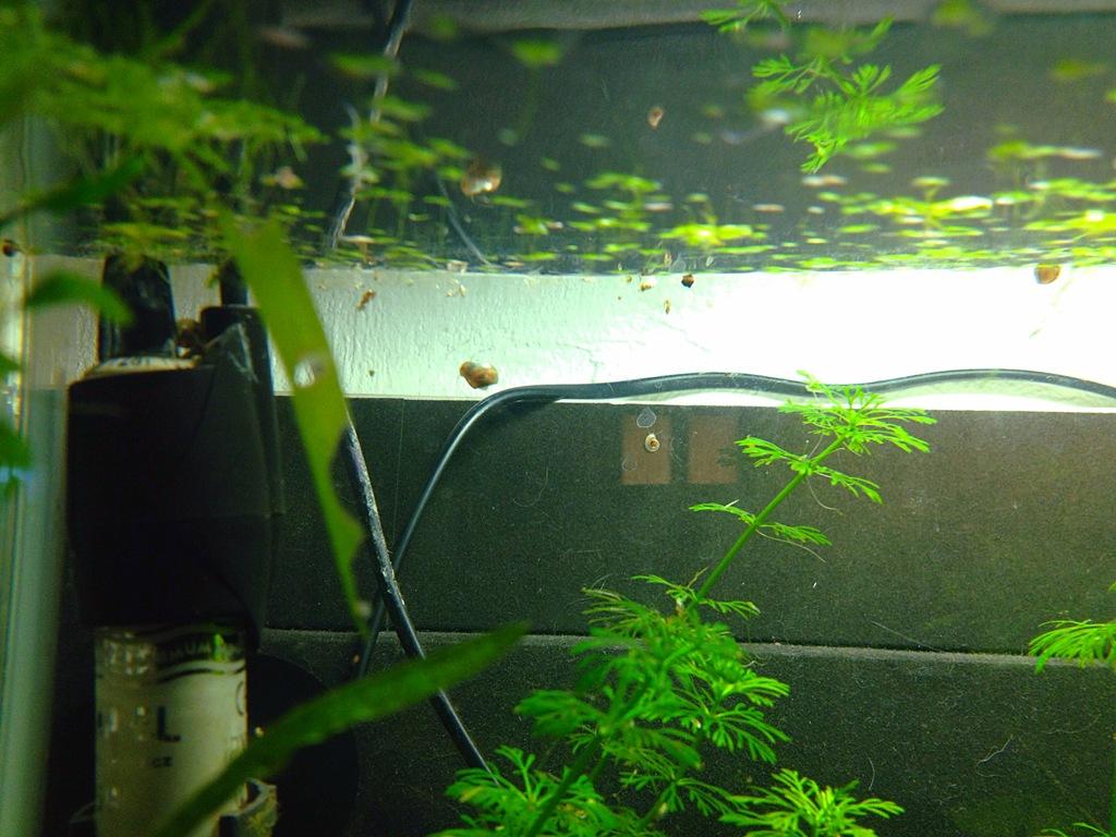 40l super fish home 40  - Page 4 7FC32635-CD2A-464E-9C54-C6FA1E7FAC03_zpsjijptrmh