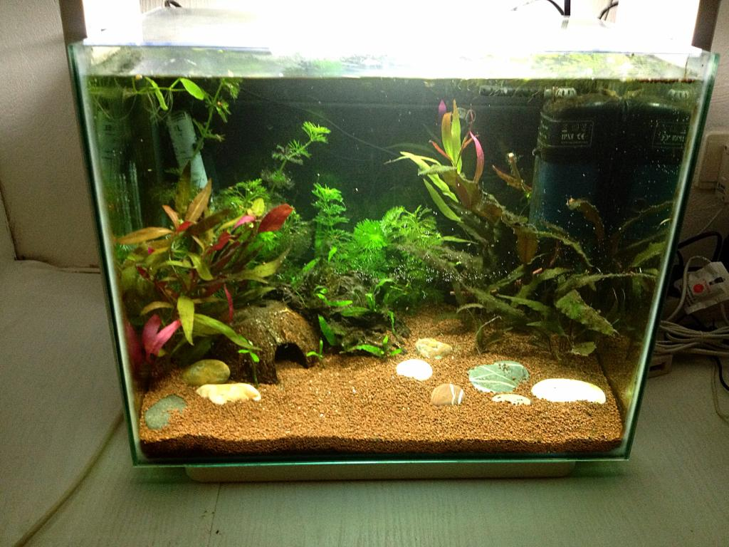 40l super fish home 40  894B759E-E759-4A7D-94A1-6741881CB4ED_zps4dk8tic5