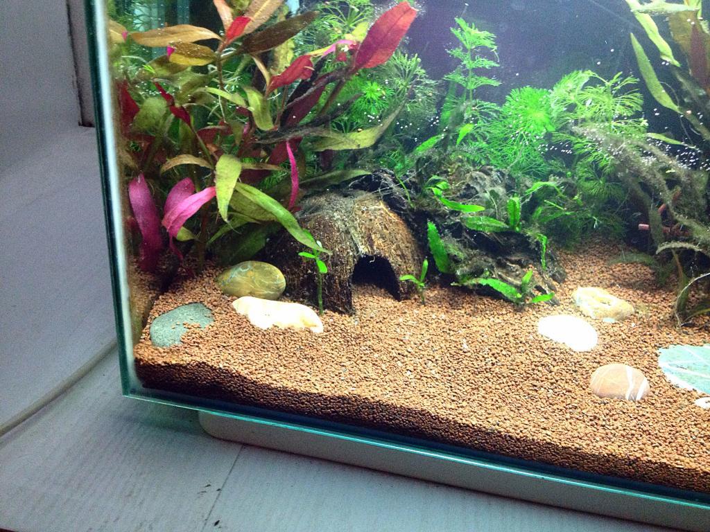 40l super fish home 40  99D8AFD2-1F9F-4123-BF31-E15CF7B60550_zpsrmqxqwjm