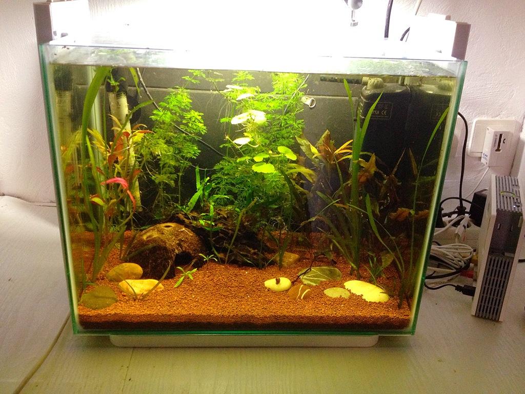 40l super fish home 40  - Page 4 B03FDAC8-89BC-4842-A162-DA47C63FBA57_zpsikooopm3