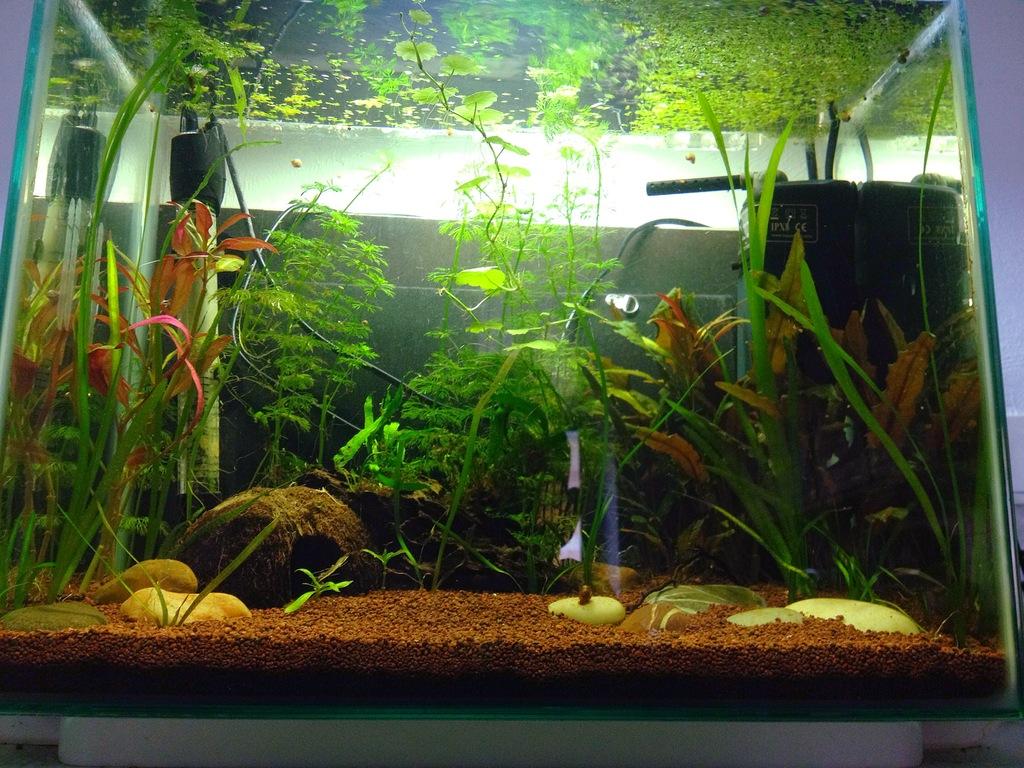 40l super fish home 40  - Page 4 B97898DB-4C2F-4FBF-8E59-01BE964D60E3_zpsfgrnb3fv